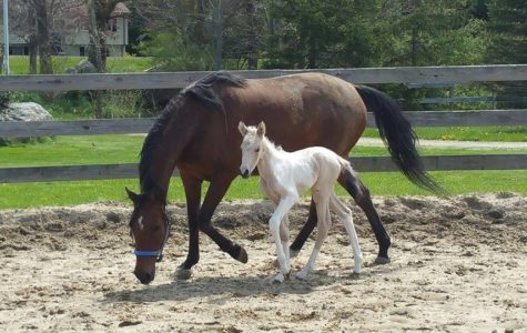 The Little Foal That Captured My Heart