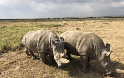 Rectory Student Helps Save the Black Rhino