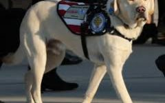 President Bush's (41) Service Dog, Sully