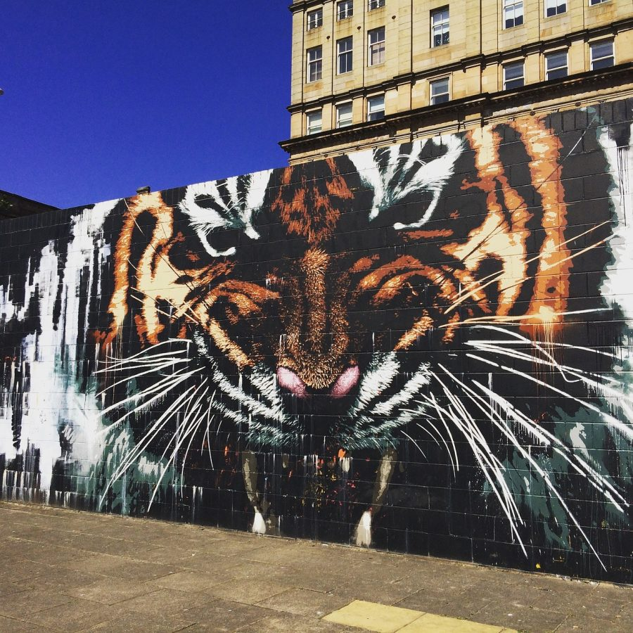 Tiger graffiti by James Klinge in Glasgow, Scotland.