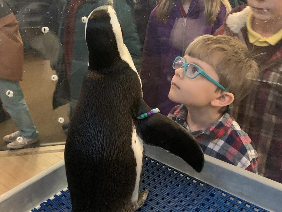 An African Penguin Visits Rectory
