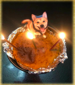 Jennie's dog on the cake she made for him to celebrate his birthday. Mmm!!